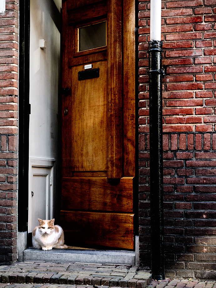 los gatos holandeses