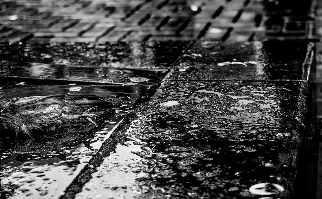 hay lluvia en mi zapatos