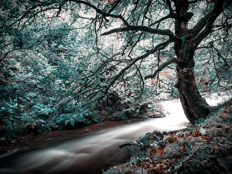 las niñas del bosque