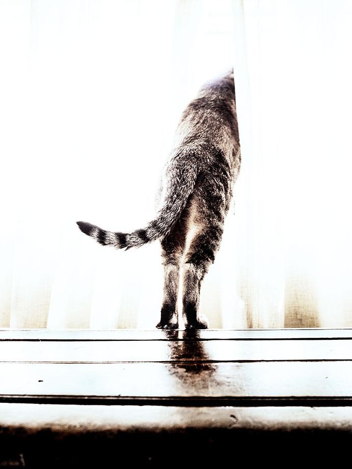 balada triste del gato cobarde
