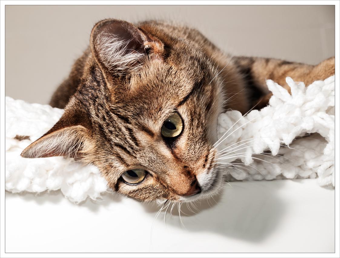 the  <strike>year</strike>  week of the cat
