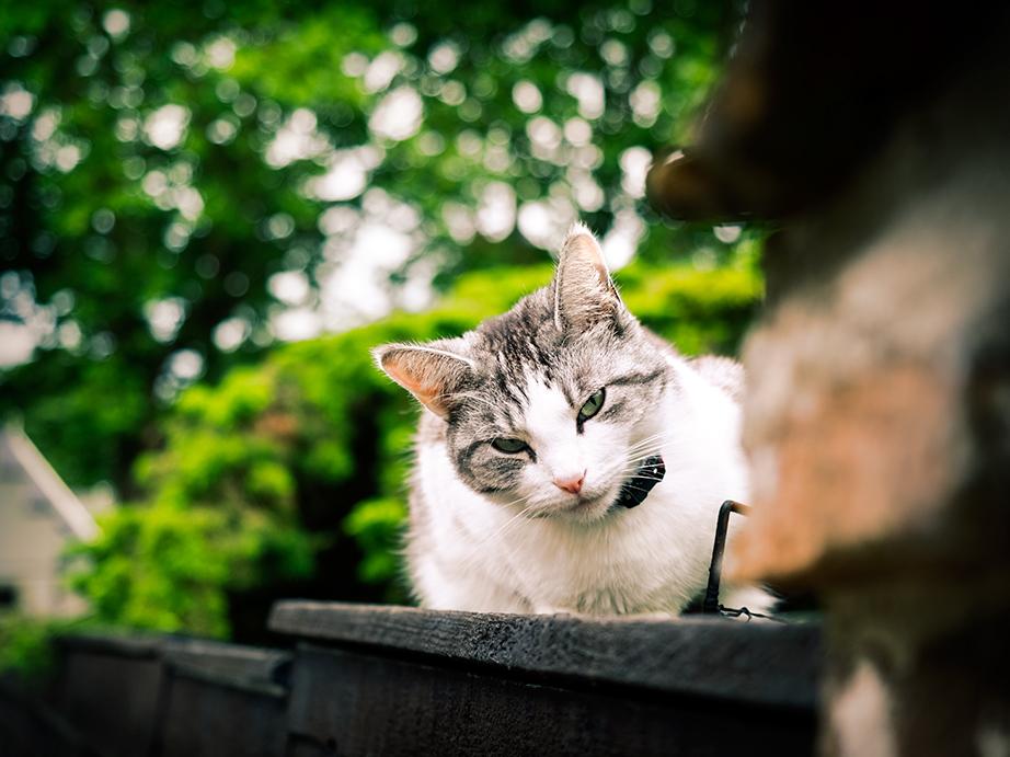 los gatos en Holanda