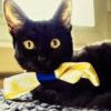 el gato Octavio