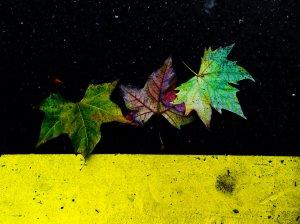 invierno / otoño / 09